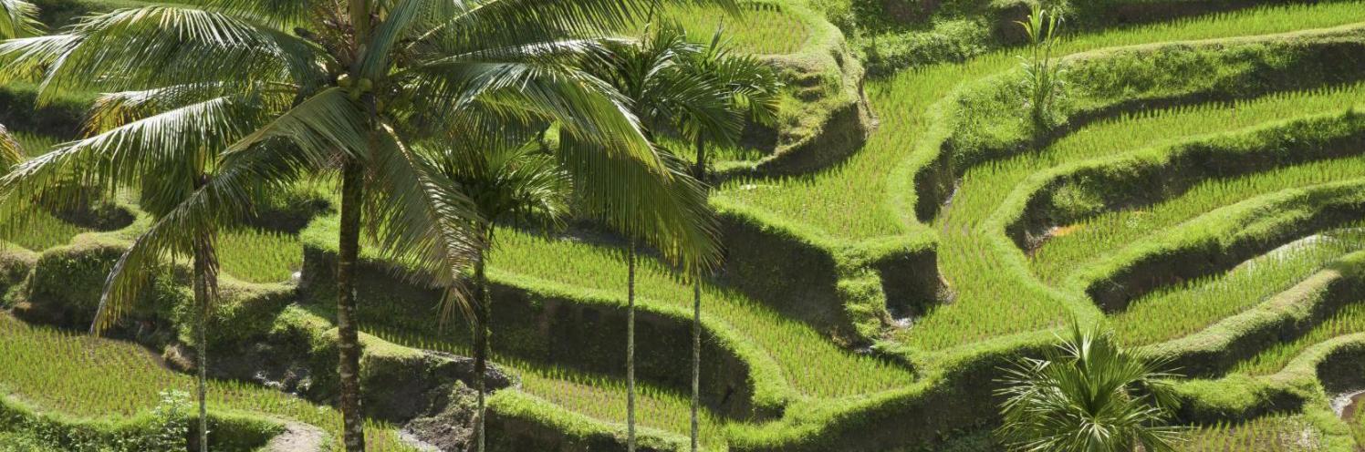 Tegalalang Bali [Booking.com]